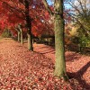 Mill Hill Park in the fall. (Credit: Kasabach)