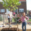 Camden SMART volunteers planting trees