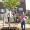 Camden SMART volunteers planting trees