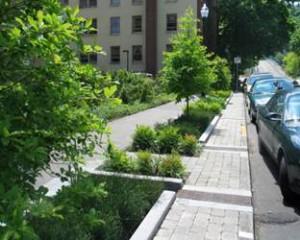 Green street_tree pits_blue car