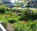 bioswale in Somerset, New Jersey, captures rainwater and reduces flood risk.